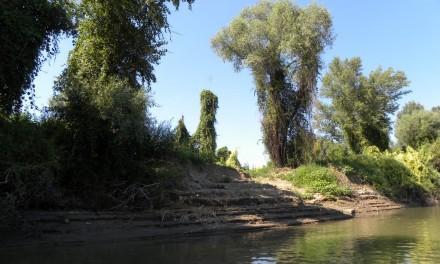 Hullámtéri erdő a Tisza jobb partján