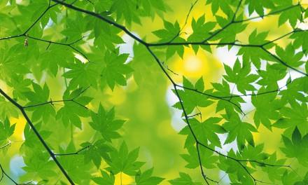 """Fórum a """"Zöld Város"""" pályázat elképzeléseiről"""