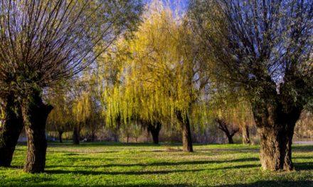Körös-toroki ősz képekben