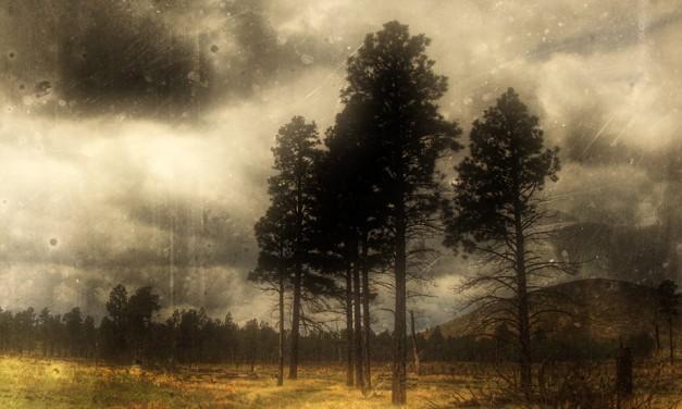 Lakossági felhívás az erdő- és szabadtéri tüzek megelőzésére