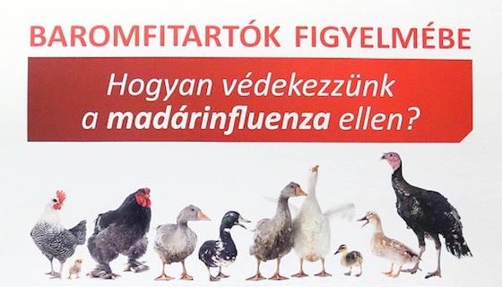 Hogyan védekezzünk a madárinfluenza ellen