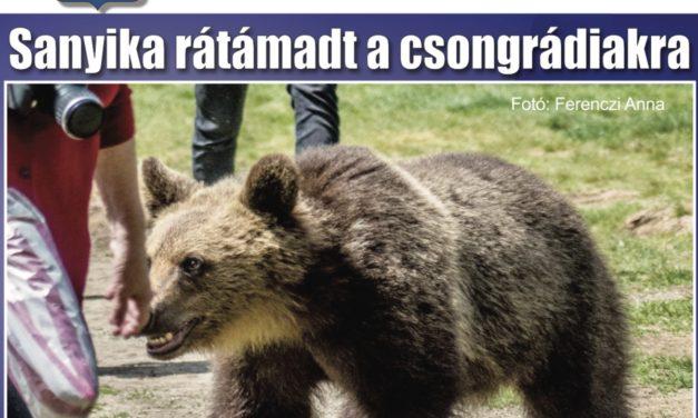 Megtekinthető a Csongrádi Hírek legújabb, május 26-án megjelenő (180.) száma